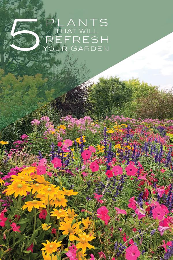 Refresh Your Garden With Mid Season Color