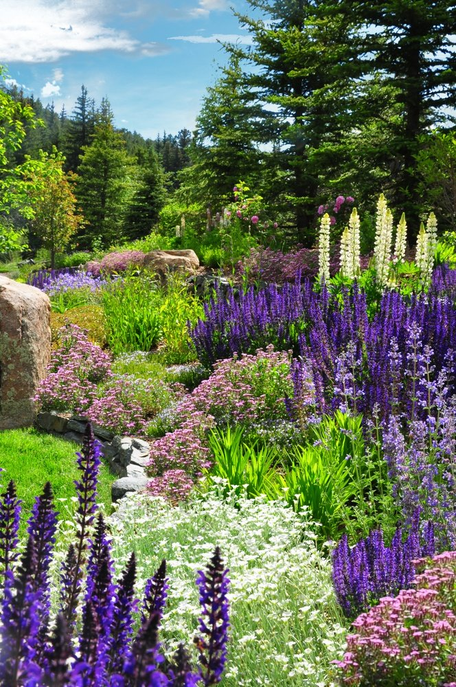 Denver garden landscape design designscapes colorado for Colorado landscape design