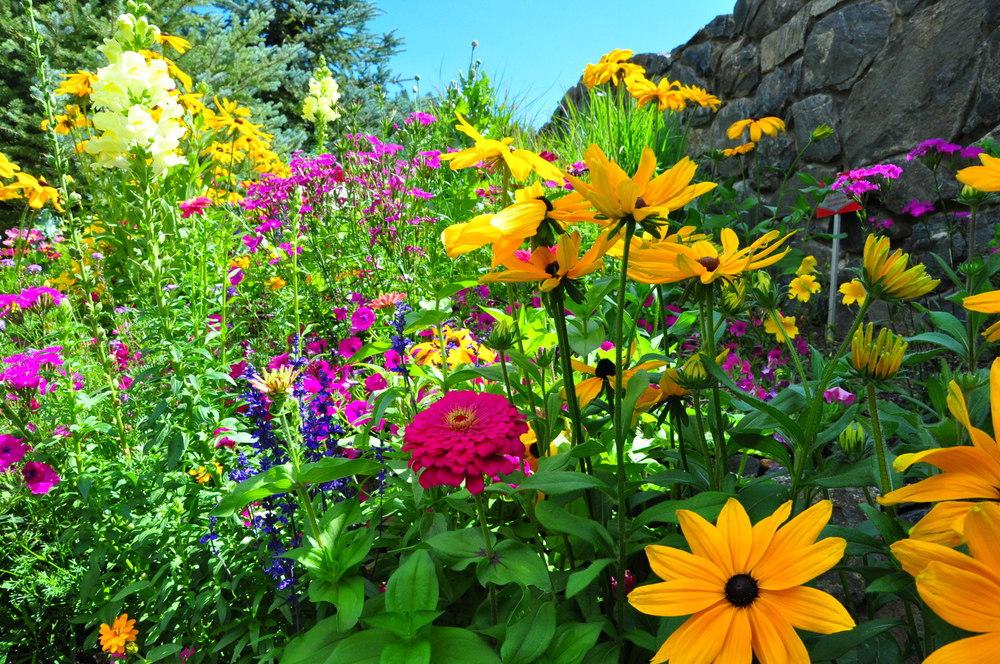Denver Lawn Maintenance Landscape Maintenance Designscapes