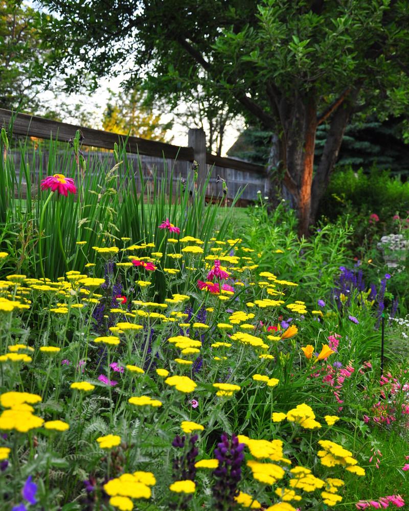 Sustainable landscape management denver co for Perennial garden maintenance