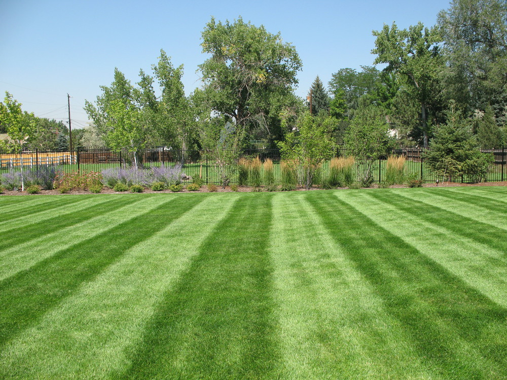 Denver lawn maintenance and garden care designscapes for Garden care maintenance