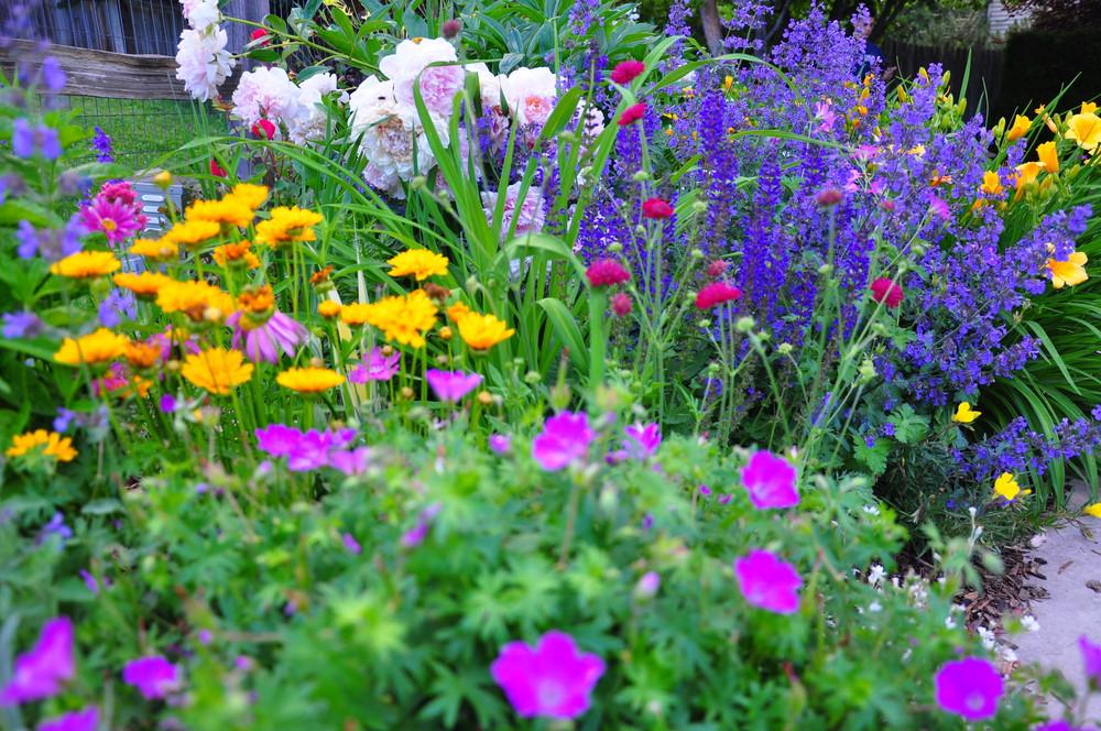 Colorado perennial annual gardens designscapes colorado for Perennial garden pictures