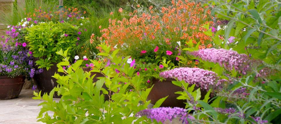 Colorado perennial annual gardens designscapes colorado for Perennial garden maintenance