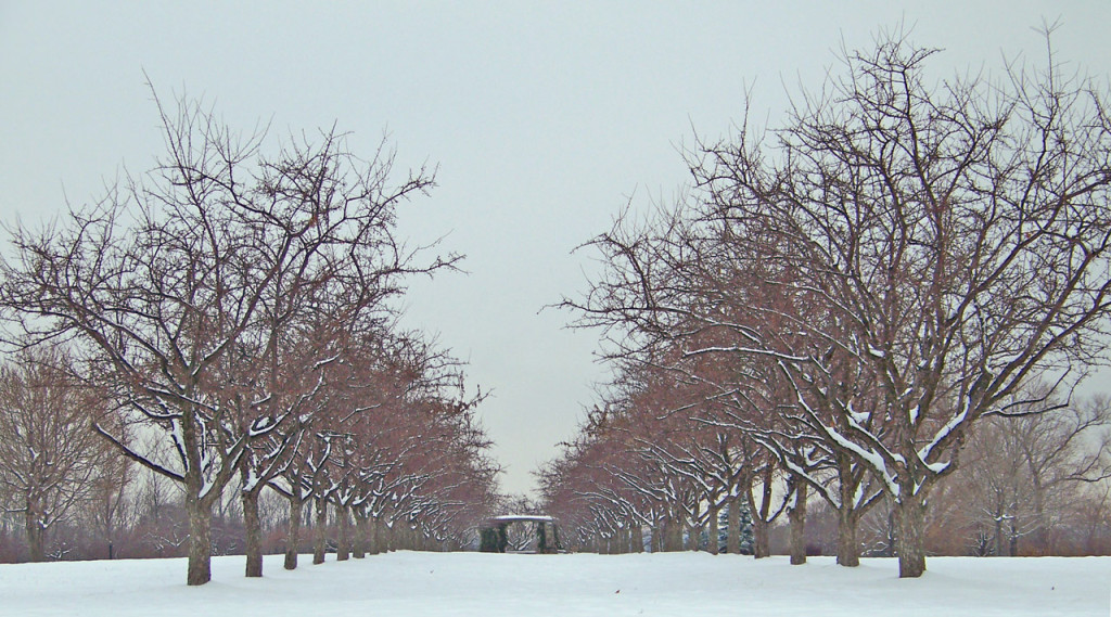 rows-of-trees-1308429725jp1